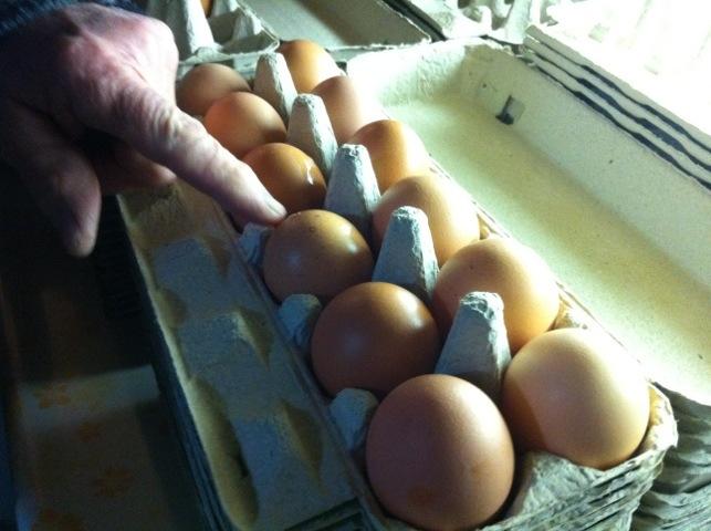 Gingerich eggs