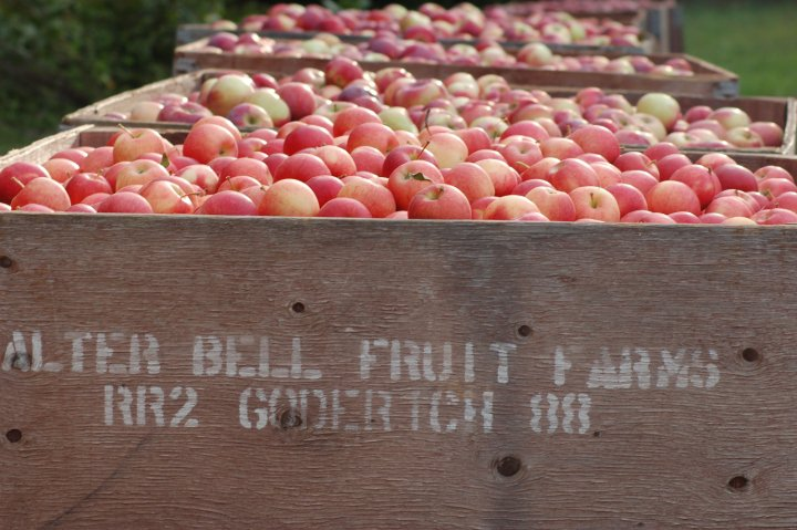 Local Huron County apples