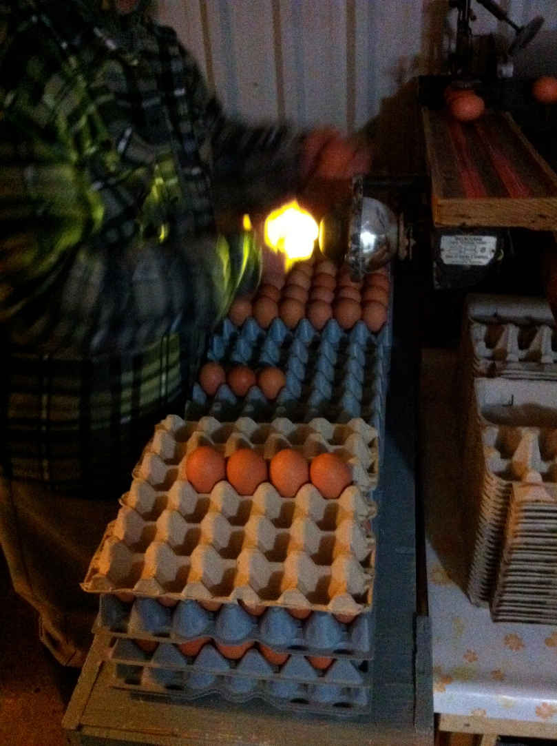 Don grading eggs